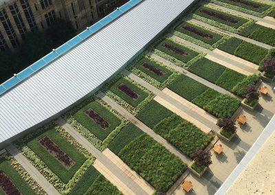 Rooftop-Landscape